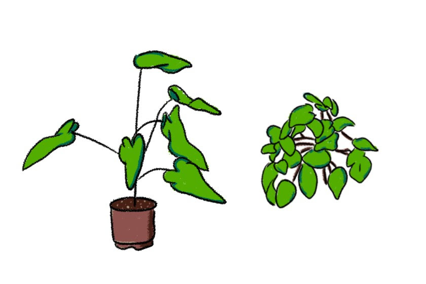 Mark Reditos' favorite plants are philodendrons and pothos.